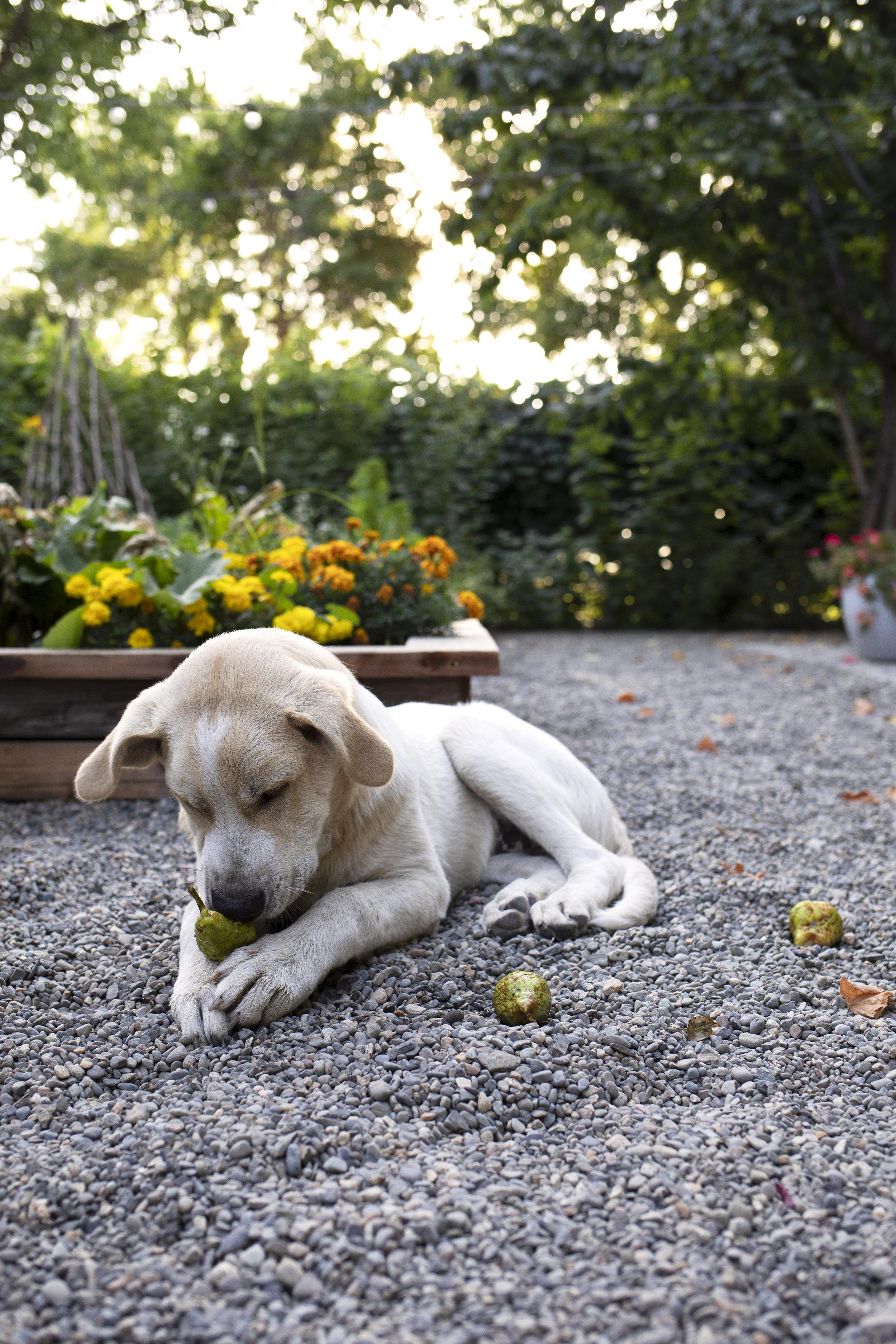 The Grit and Polish - Gibbs Farm Dog 5.jpg