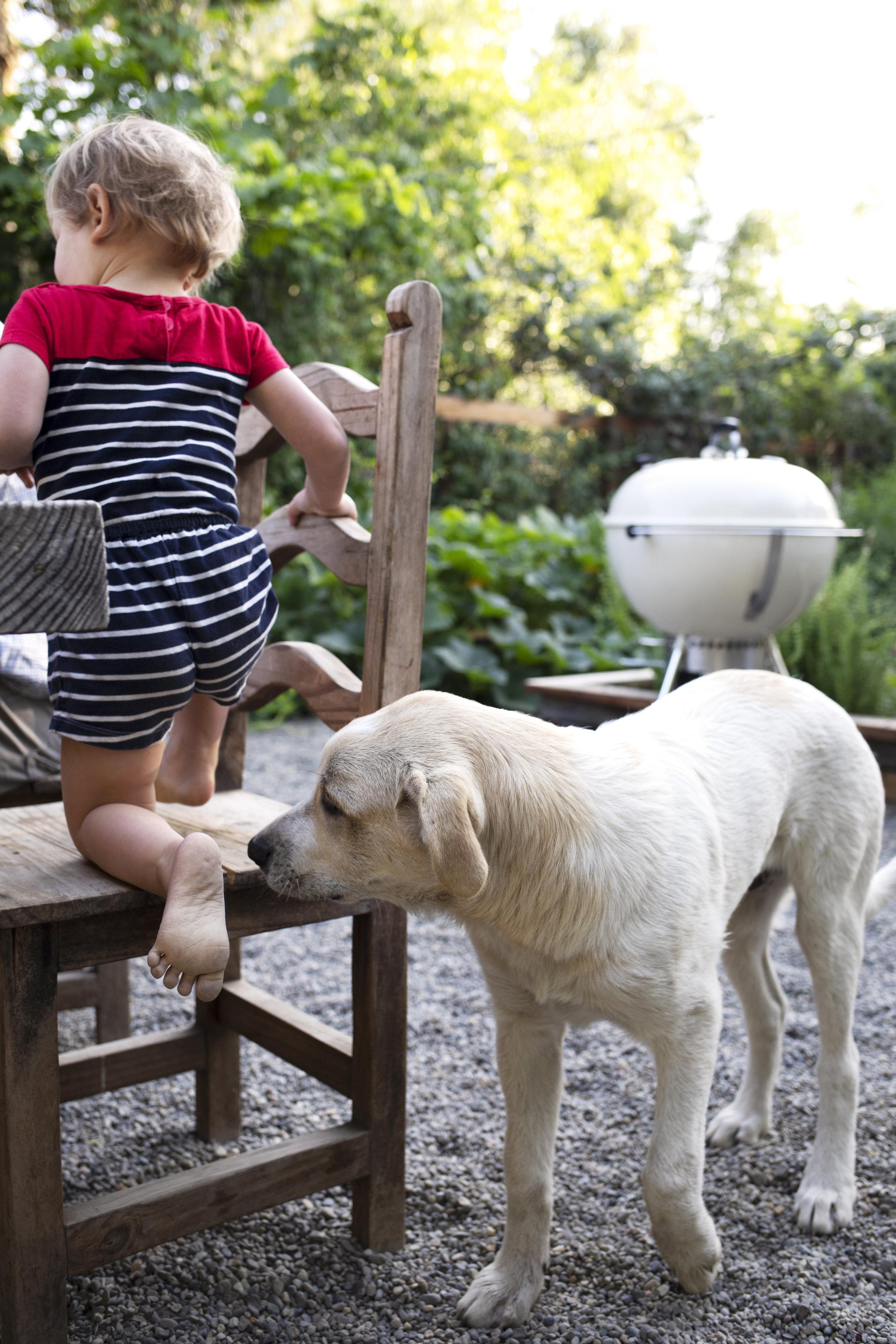 The Grit and Polish - Gibbs Farm Dog 9.jpg