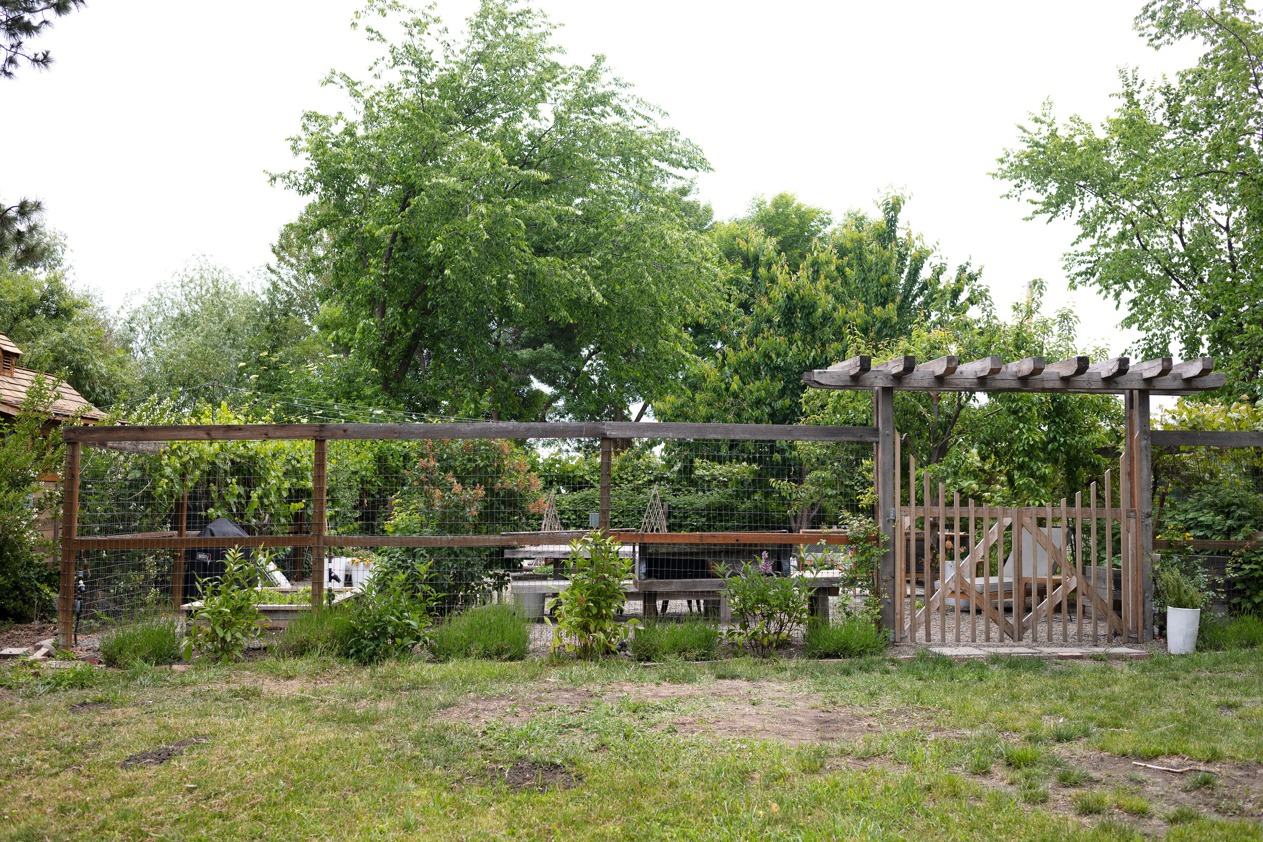 creating a lilac hedge + a tip for using landscape fabric | the Grit and Polish