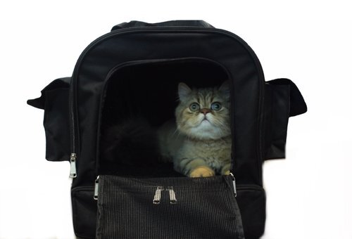 Kitty Obsession   Cat Carrier with litter box   is the best cat carrier with litter box available. It includes everything your cat needs on the go. The carrier comes with containers for food and water, a scooper, and trash bags. Most importantly, the carrier includes a portable litter box storage area (closed off in its own compartment) for use when you arrive to your destination.