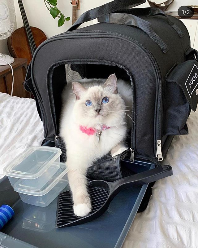 The All-In-One Carrier/ Emergency kit also doubles as a cat condo! Many customers find their cats sleeping & hanging out in it. 💕 Tag us to be featured 📷