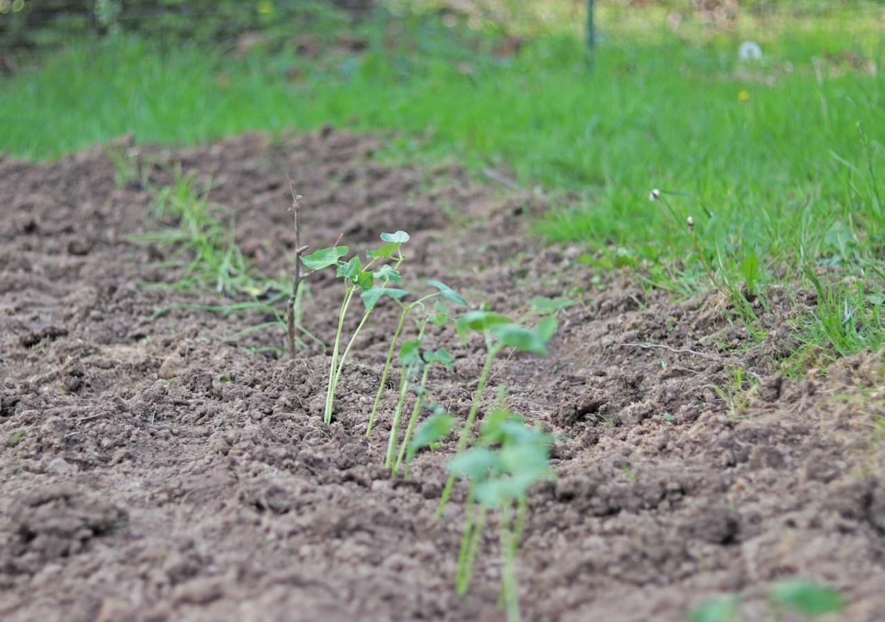 sproutsplanted.jpg