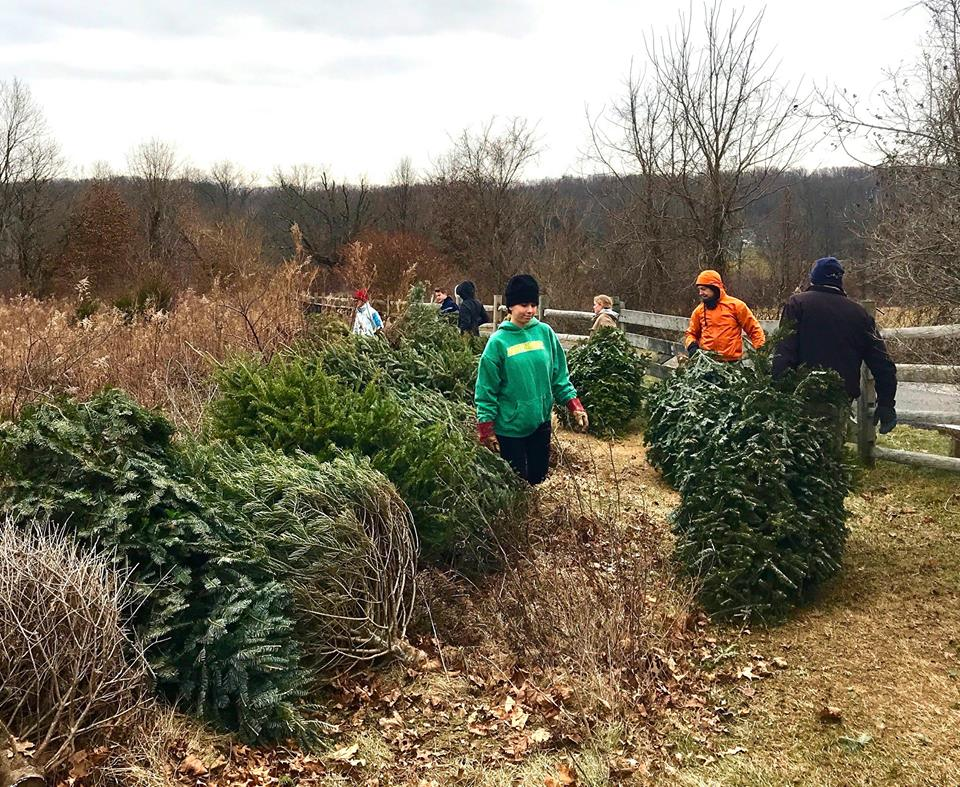 Volunteers create rings around native plants to protect them from deer herbivory.