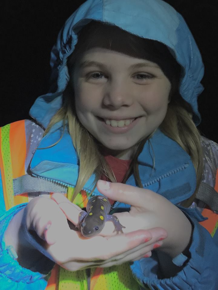 Volunteer Amphibian Crossing Guard helping Yellow-spotted salamanders cross the road during their annual migration.