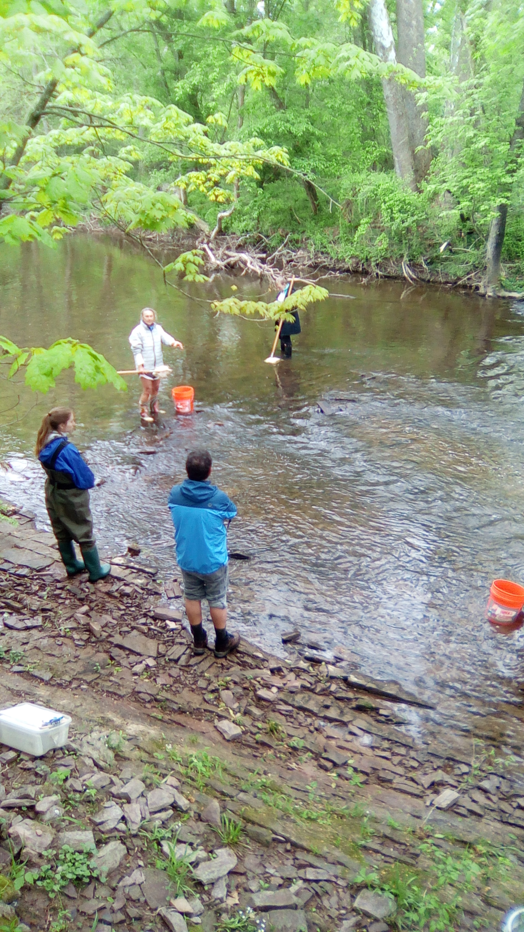Volunteers learning how to collect aquatic macroinvertebrates