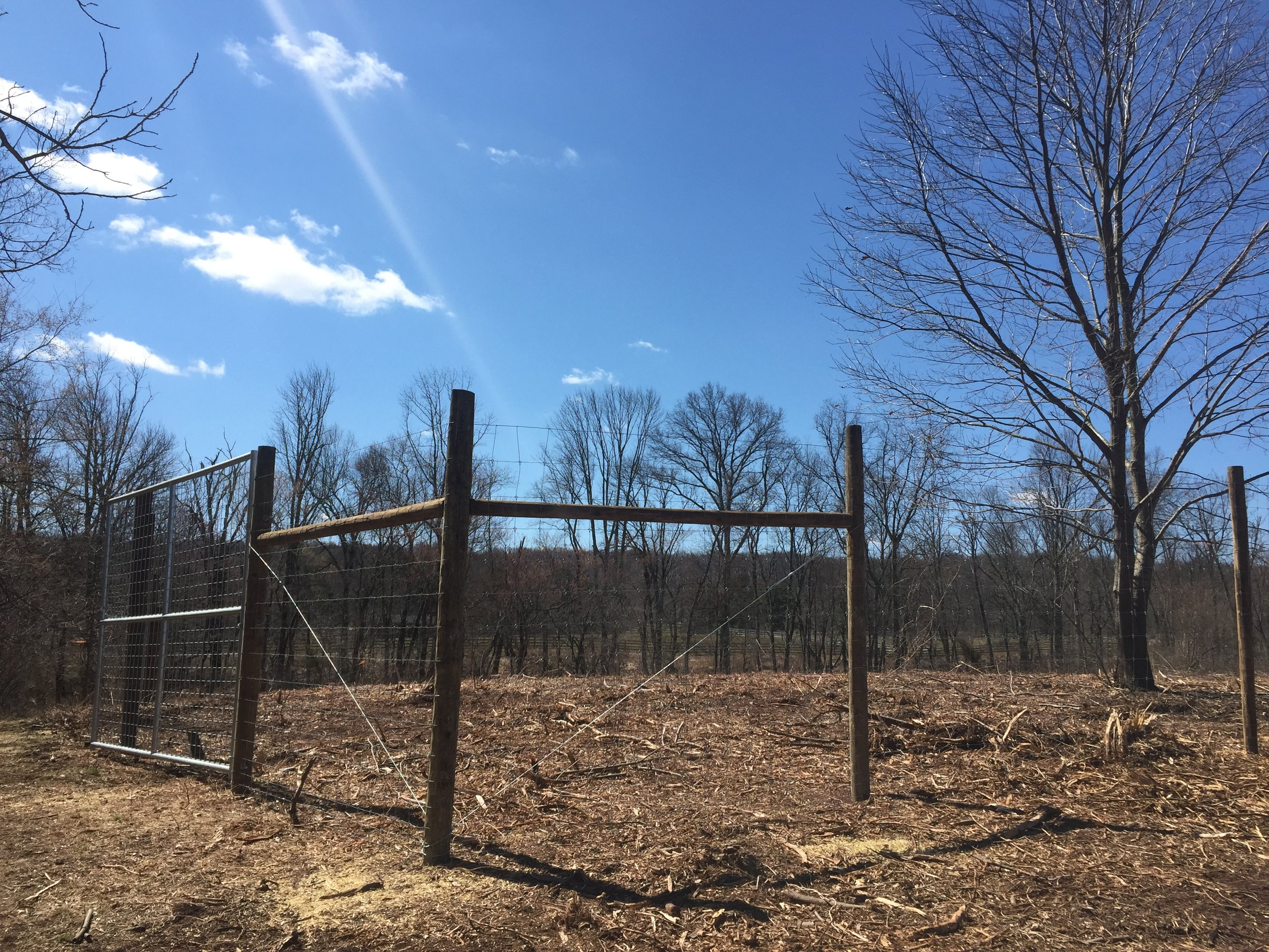 Fencing is complete at the Foraging Forest.