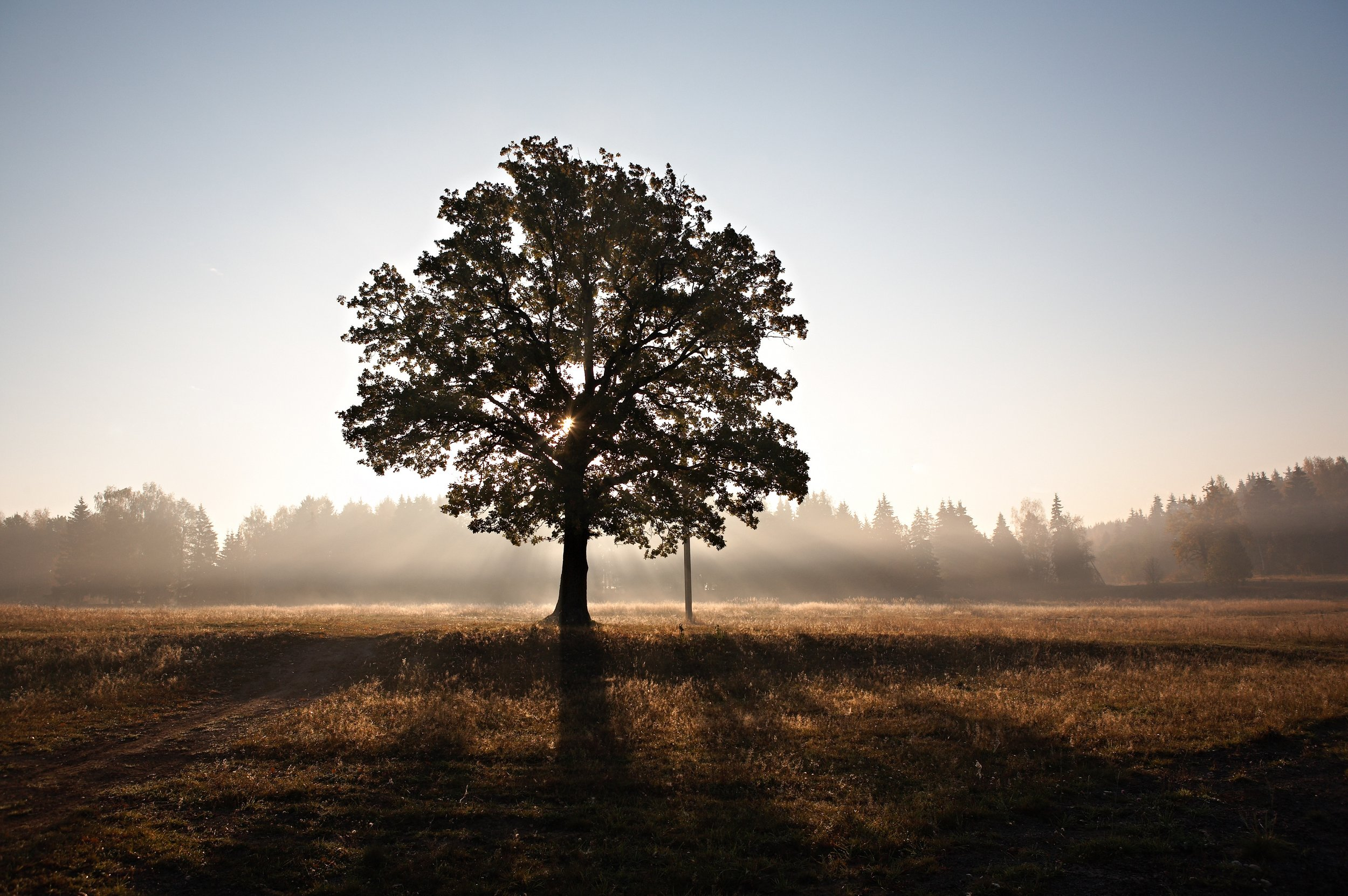"""'""""Concerns about pollution, appropriate land and energy use, and the de-personalization of the dying process, as well as a Baby Boom demographic that puts 80 million Americans over the edge in the next couple of decades, are driving the natural burial trend."""" (National Funeral Directors Association)."""