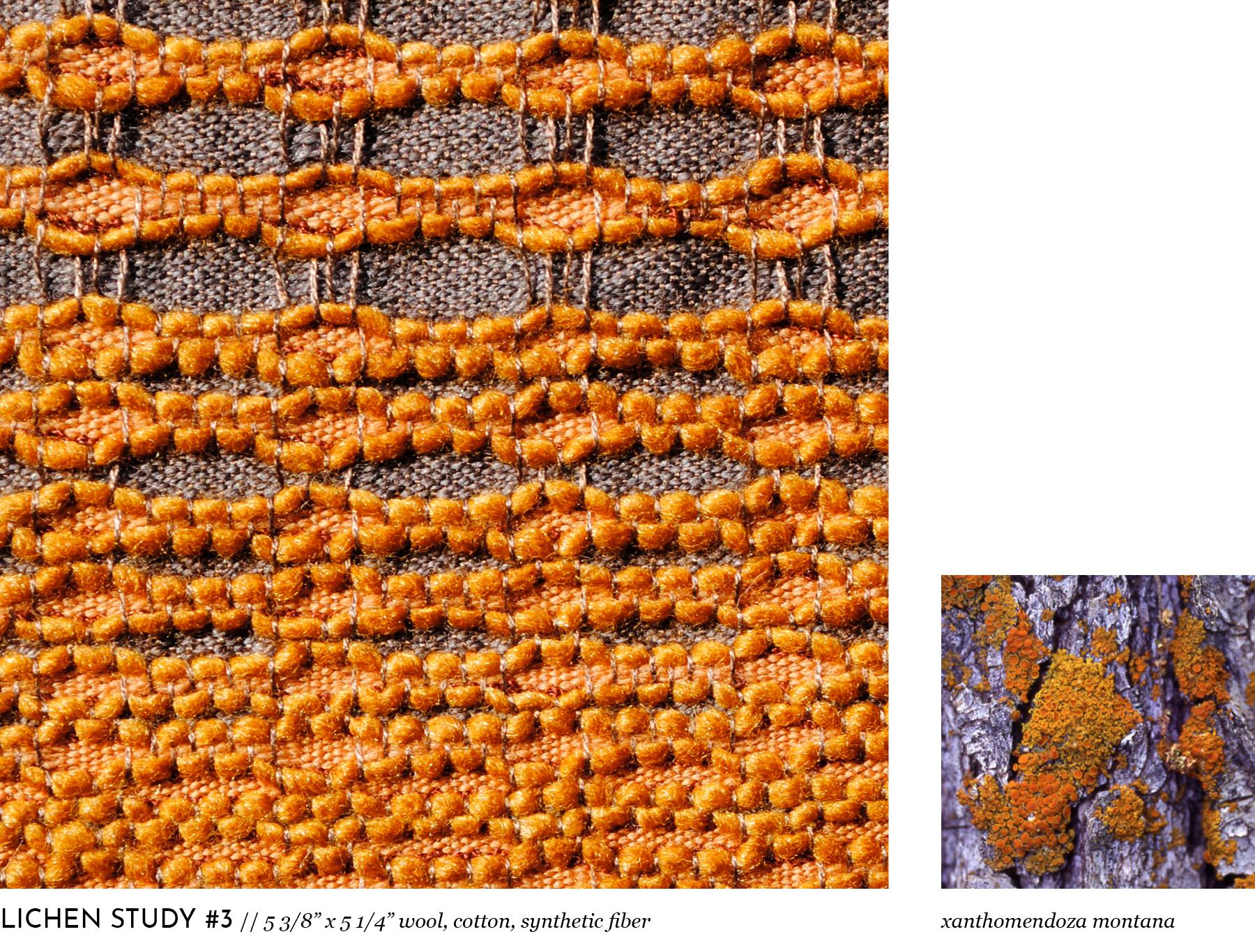 lichen9.jpg