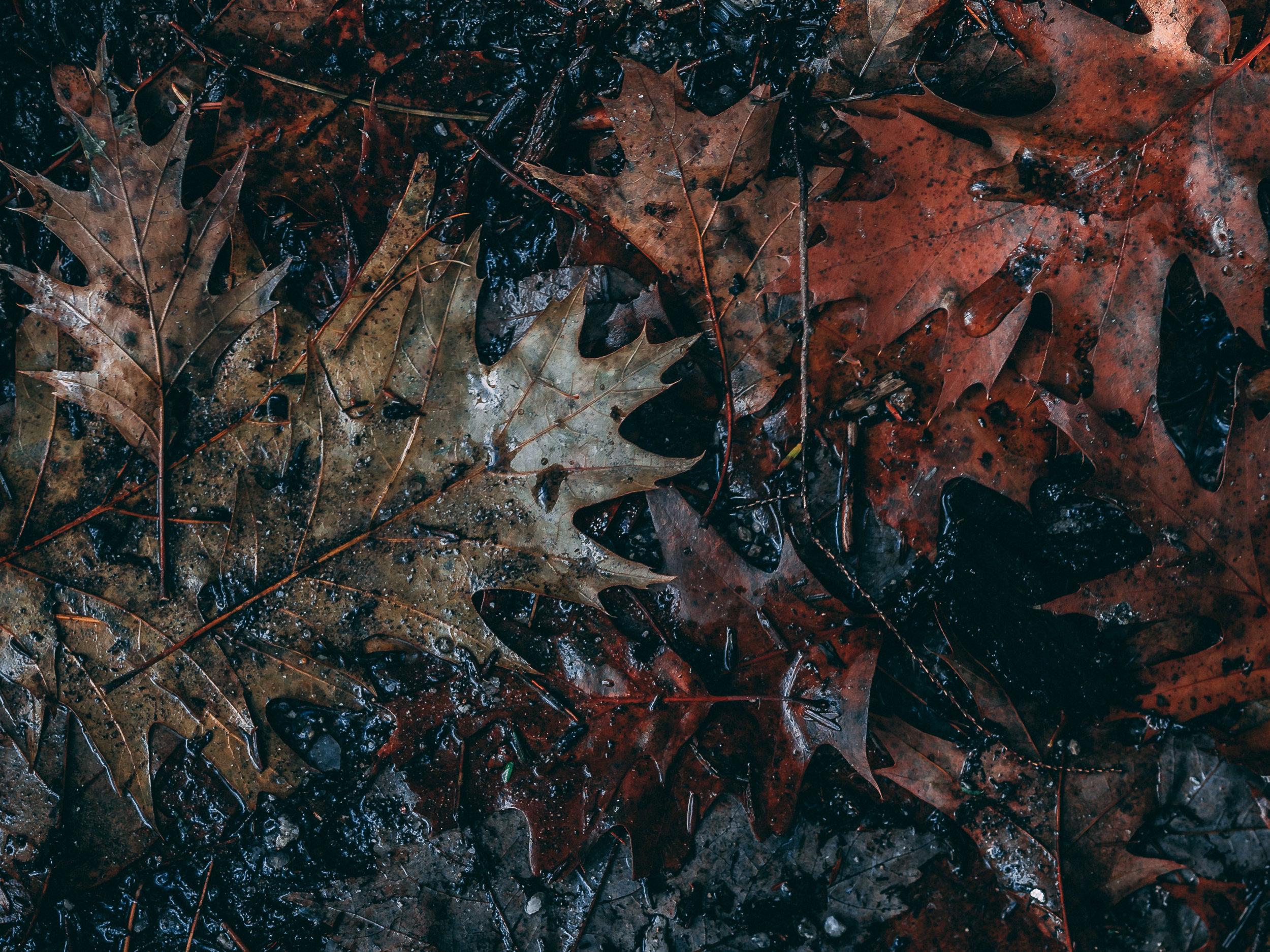 muddy leaves.jpg