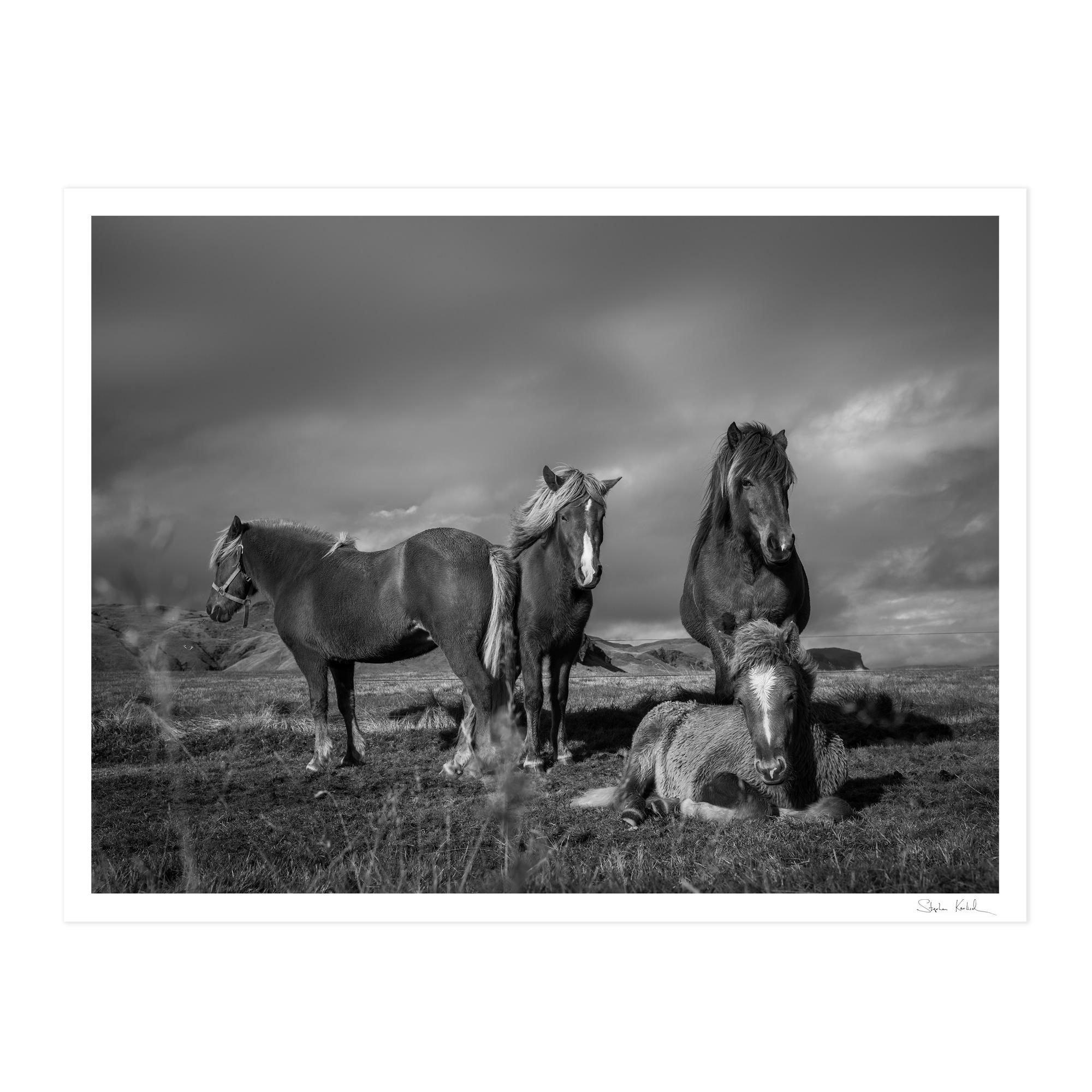 karlisch_frame_icelandic_ponies_nude,jpg