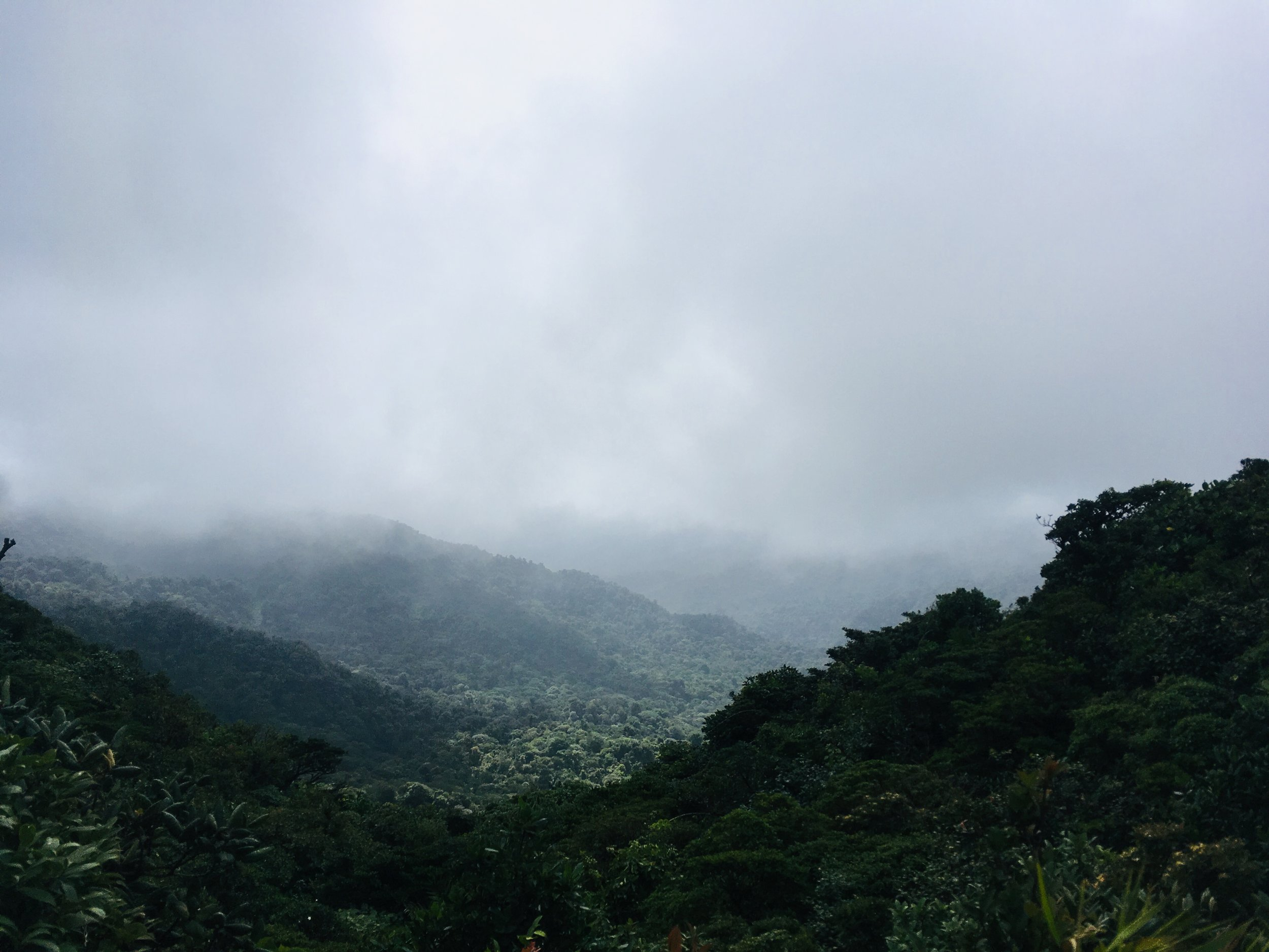 Monteverde Cloud Forest, Costa Rica - Photo by Anjali Narasimhan