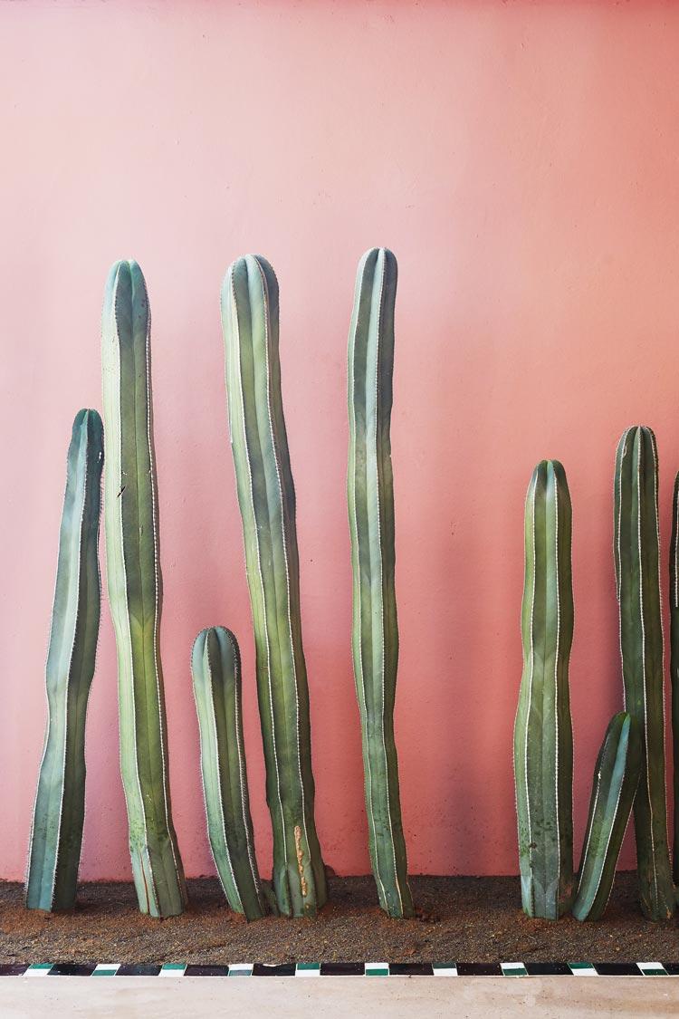 Sands-Hotel-Spa-cactus-detail.jpg