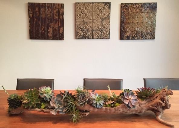 driftwood sfplants website.jpg