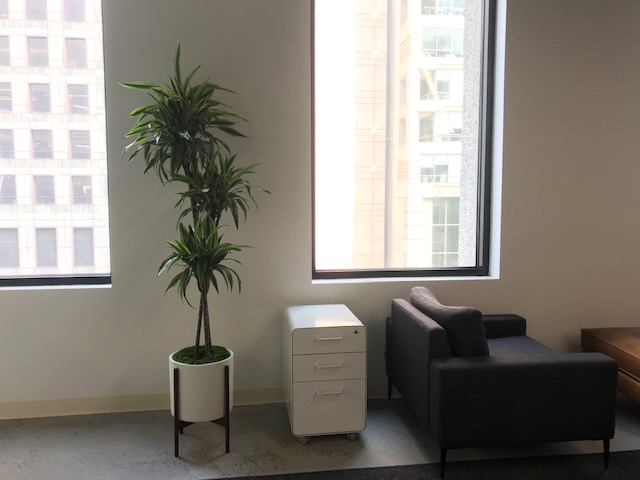 sf plants 4.jpg