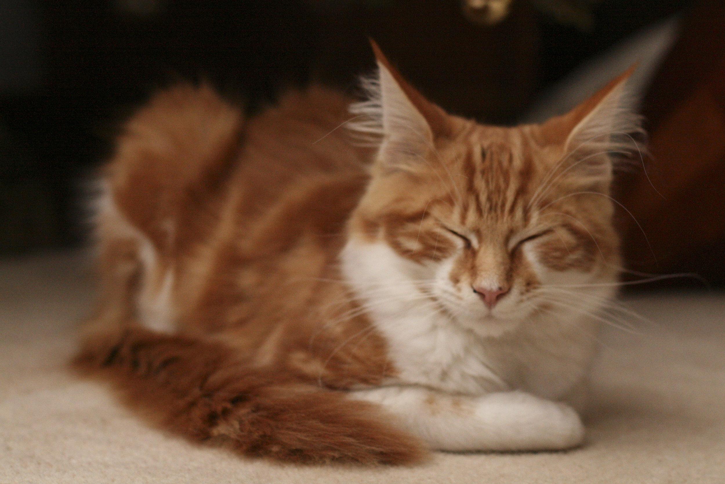 rups-kitten.jpg