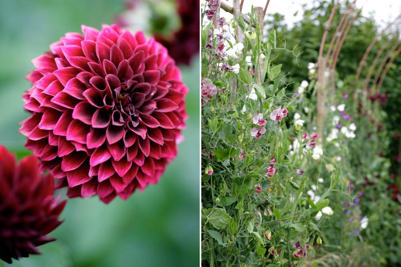Perch Hill Garden in July