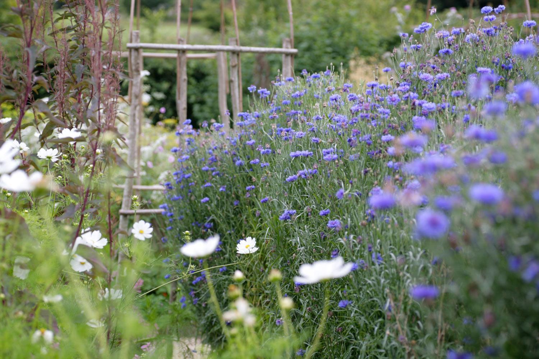 Cut flower beds at Perch Hill