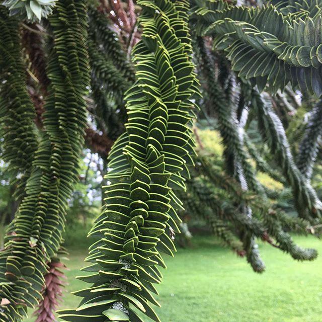 Name this tree? #naturephotography #brodiecastle
