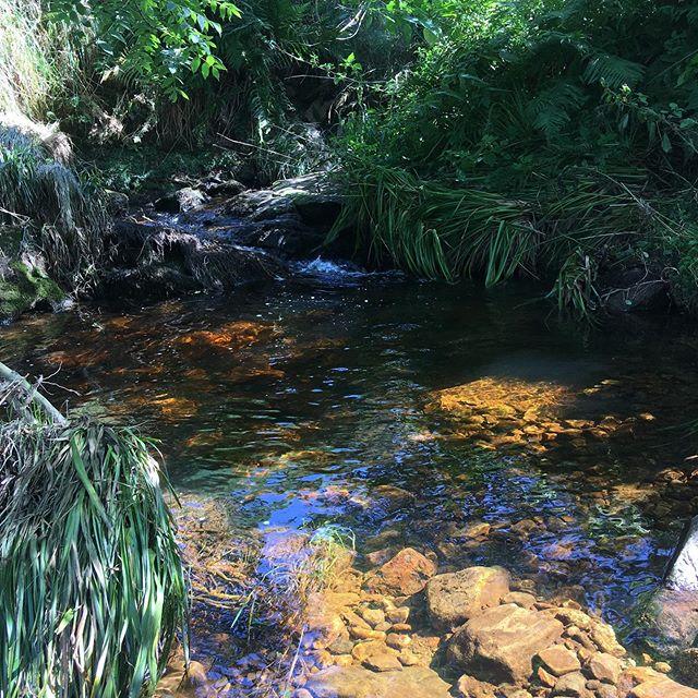 A wee slice of paradise for sharing #hobbithideaway #lovenature #flowingwater #peaceandlove