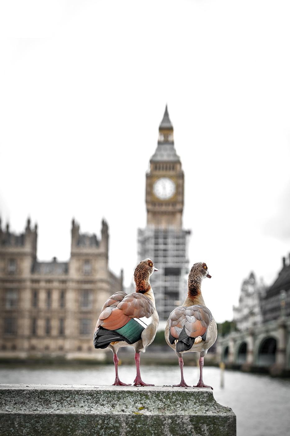 Diabetes-UK-London-Bridges-Challenge-on-1st-October-2017-©-Brendan-Foster-Photography-444-Edit-23.jpg