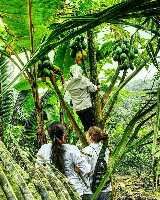 """""""El aprendizaje que se obtiene de la naturaleza beneficia directamente e influye positivamente en la cocina de Bocavaldivia,lo que no hacemos aquí es limitar a los seres humanos,sino más bien explorar y potenciar sabiamente sus capacidades""""  @bocavaldivia @tanusas.hotel #bocavaldivia #biodiversity #love#cosecha#naturaleza#vitaminas#naturalwisdom#freshonly#experienceforall#360degreesofhonor#manabi#ecuador🇪🇨"""