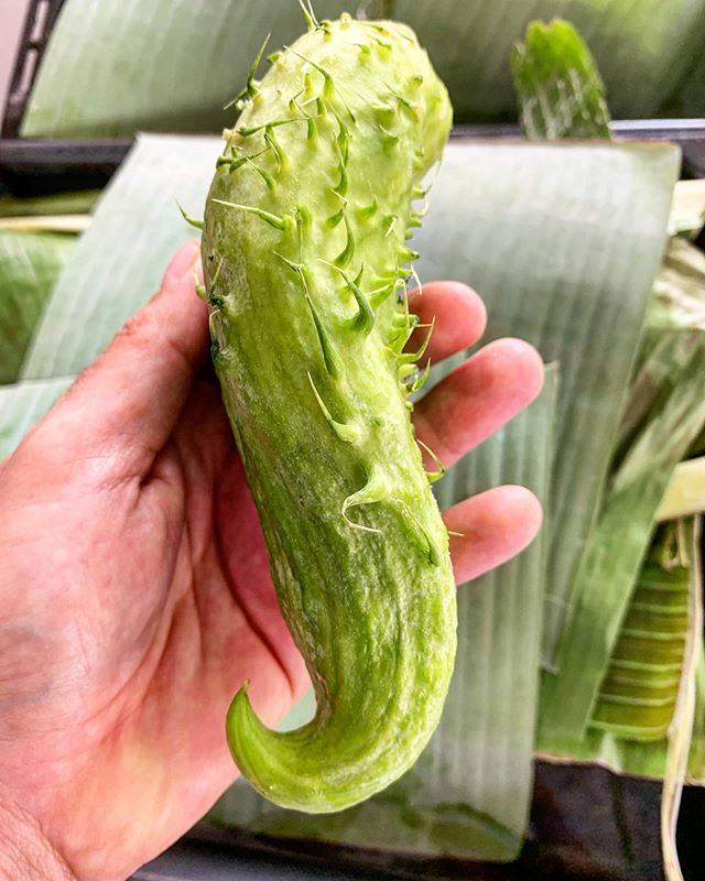 """""""La Achojcha es uno de mis productos favoritos,fruto de una planta trepadora muy típica de los Andes,es muy buena para preparaciones de dulce y de sal,es un producto muy utilizado en Bocavaldivia ya que es sembrado en nuestra finca y en fincas vecinas"""" @bocavaldivia @tanusas.hotel #bocavaldivia #biodiversity #love#achojcha#andes#sweets#mamabi#ecuador🇪🇨"""