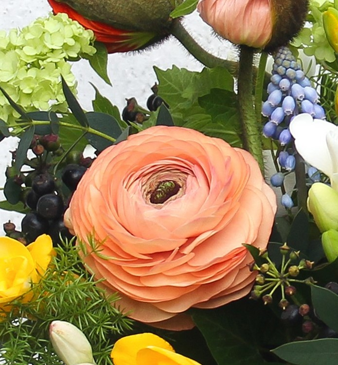 The exquisite ranunculus - layer upon layer of delicate petals
