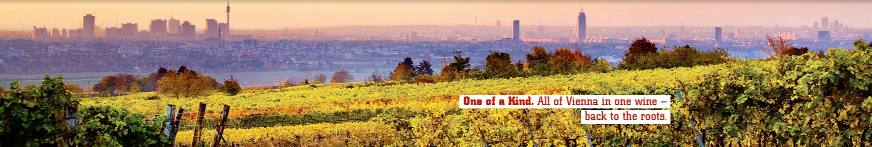 Yes, those are the real vineyards overlooking Vienna. Photo courtesy of Wieninger.