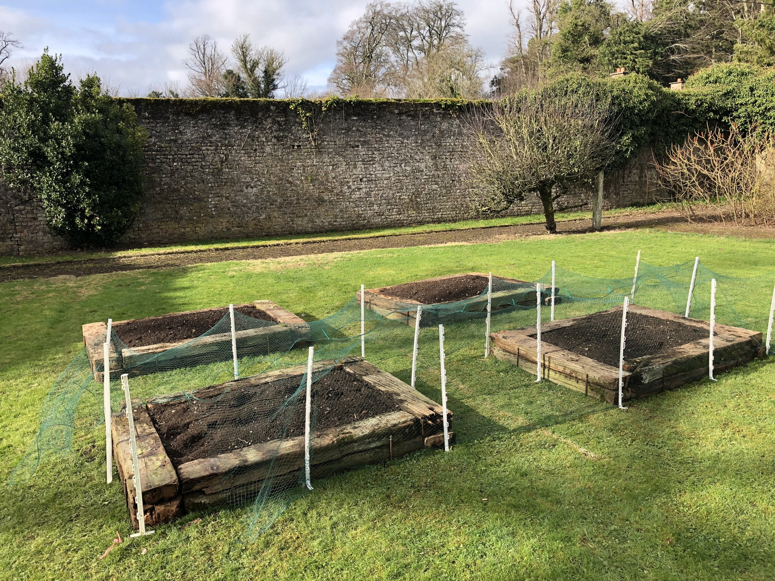 The raised beds -