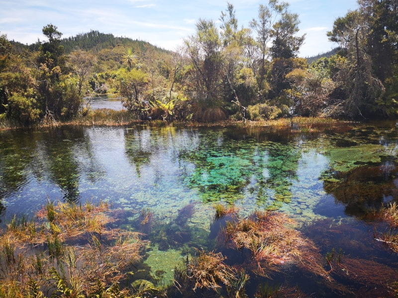 The Pupu Springs are renowned for the clarity of the water.