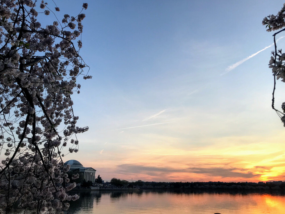 The Tidal Basin is one of Washington DC's prime attractions. It's a must do in the capital.