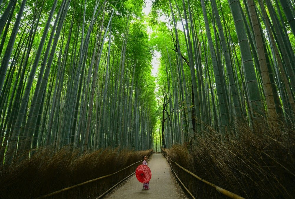 Backpacking in Japan? Head to the unforgettable Sagano Bamboo Forest!