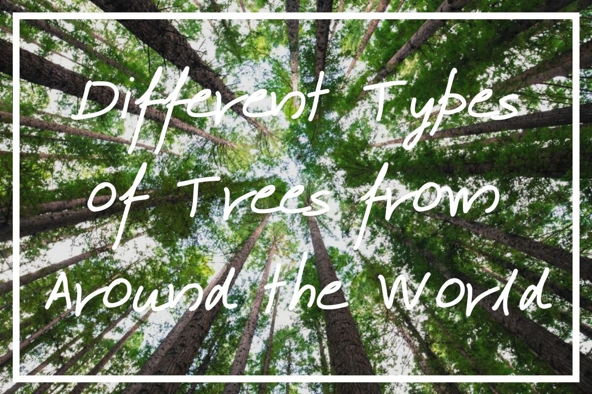 Are you interested in learning the different types of trees by name? I hope this post helps!