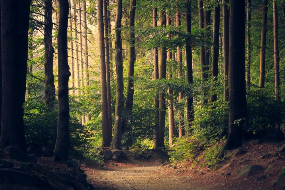 When it comes to the kind of trees you see outdoors, there are two main types: deciduous and coniferous.