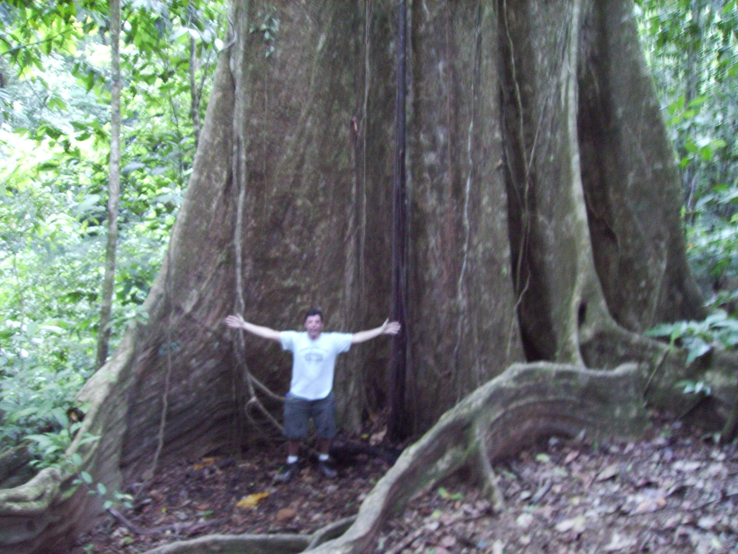 me at big tree.JPG
