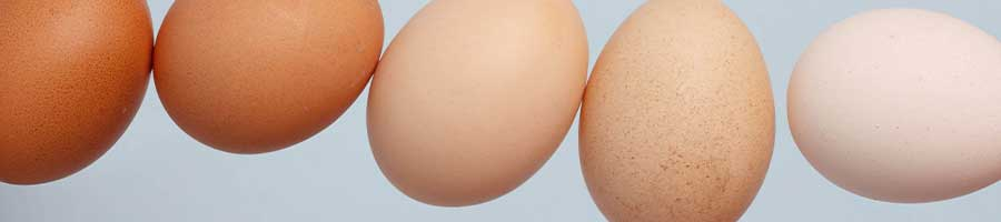 DOES EGGSHELL COLOR INDICATE EGG QUALITY? -