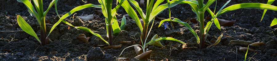 FALSE HEROES IN AGRICULTURE -