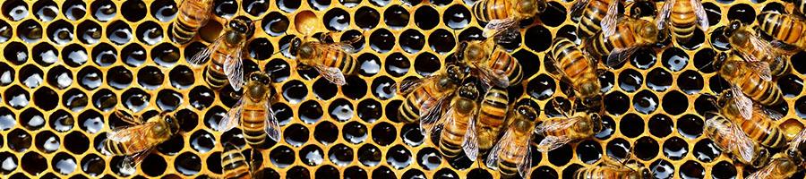 SAVING THE BEES -
