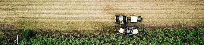 ORGANIC VS. CONVENTIONAL FARMING -