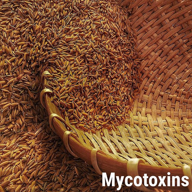 It's #toxintuesday and this week we're talking about #mycotoxins 🚫  Mycotoxins are a naturally-occurring family of toxins produced by certain molds or fungus. Mold grows in warm/humid conditions on a variety of different crops and foodstuff including cereals, nuts, spices, dried fruits, and coffee beans. Mycotoxins can cause adverse health effects from acute poisoning to long-term effects such as immune deficiency or cancer.  Efficiently store all dry-food items in a temperate environment at home to reduce the risks of fungi growth, and carefully inspect whole grains for any discoloration or residues.  Be a part of the revolution with #testsharing ✊Know the truth about your food.