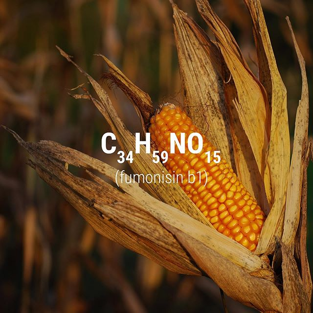 It's #toxintuesday and this week we're talking about #fumonisinb1 🚫 Fumonisins are a group of naturally occurring mycotoxins, produced by mold or fungi. The most prevalent member in the group is Fumonisin B1, which is commonly found in grain products, especially corn. Exposure to fumonisins has been linked to various adverse health effects such as birth defects and cancer.  Demand for transparency can shape the industry. Be a part of the revolution with #testsharing ✊Know the truth about your food.