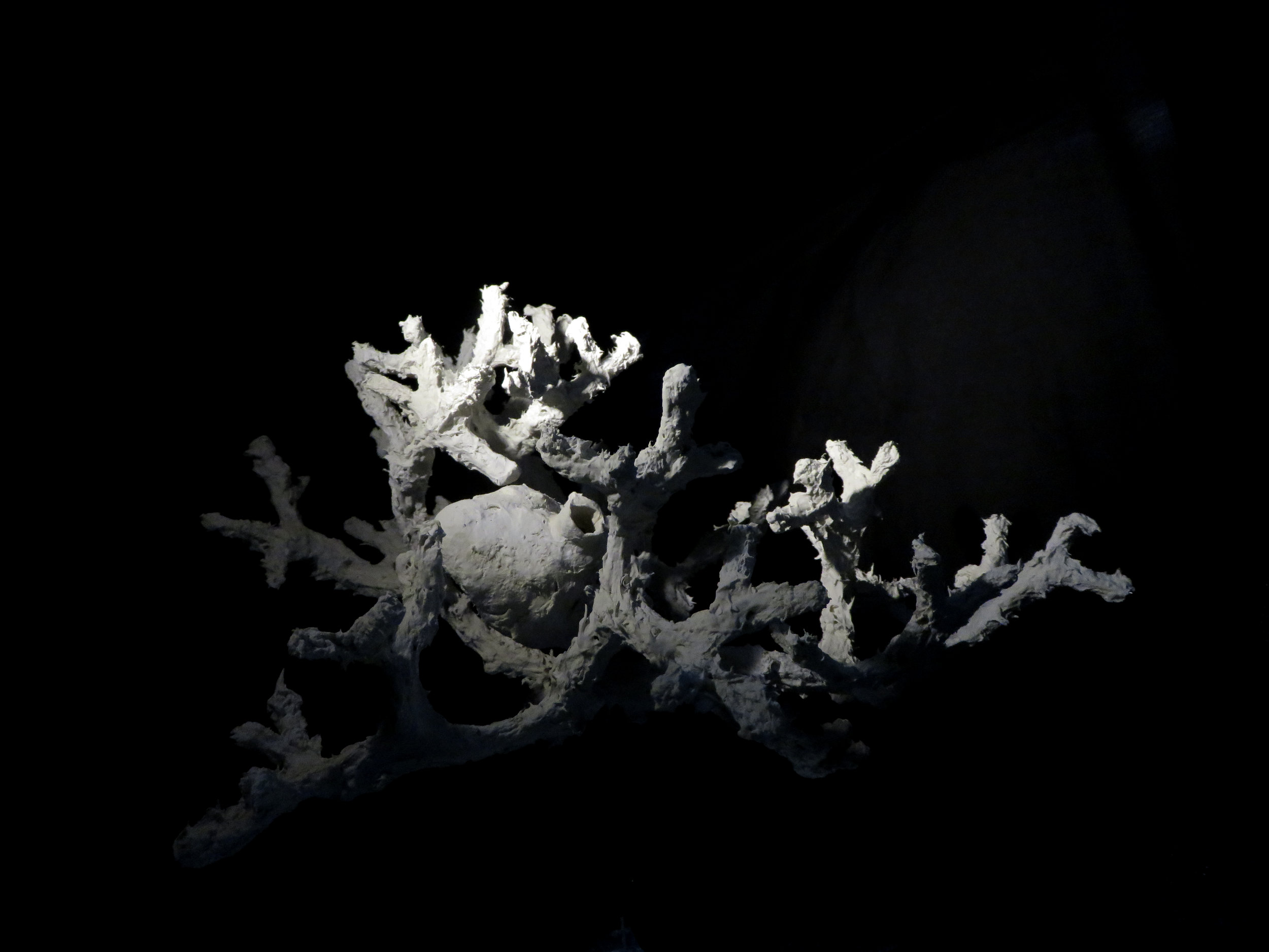 Corallicide1.jpg