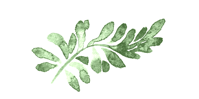 light green leaf branch.png
