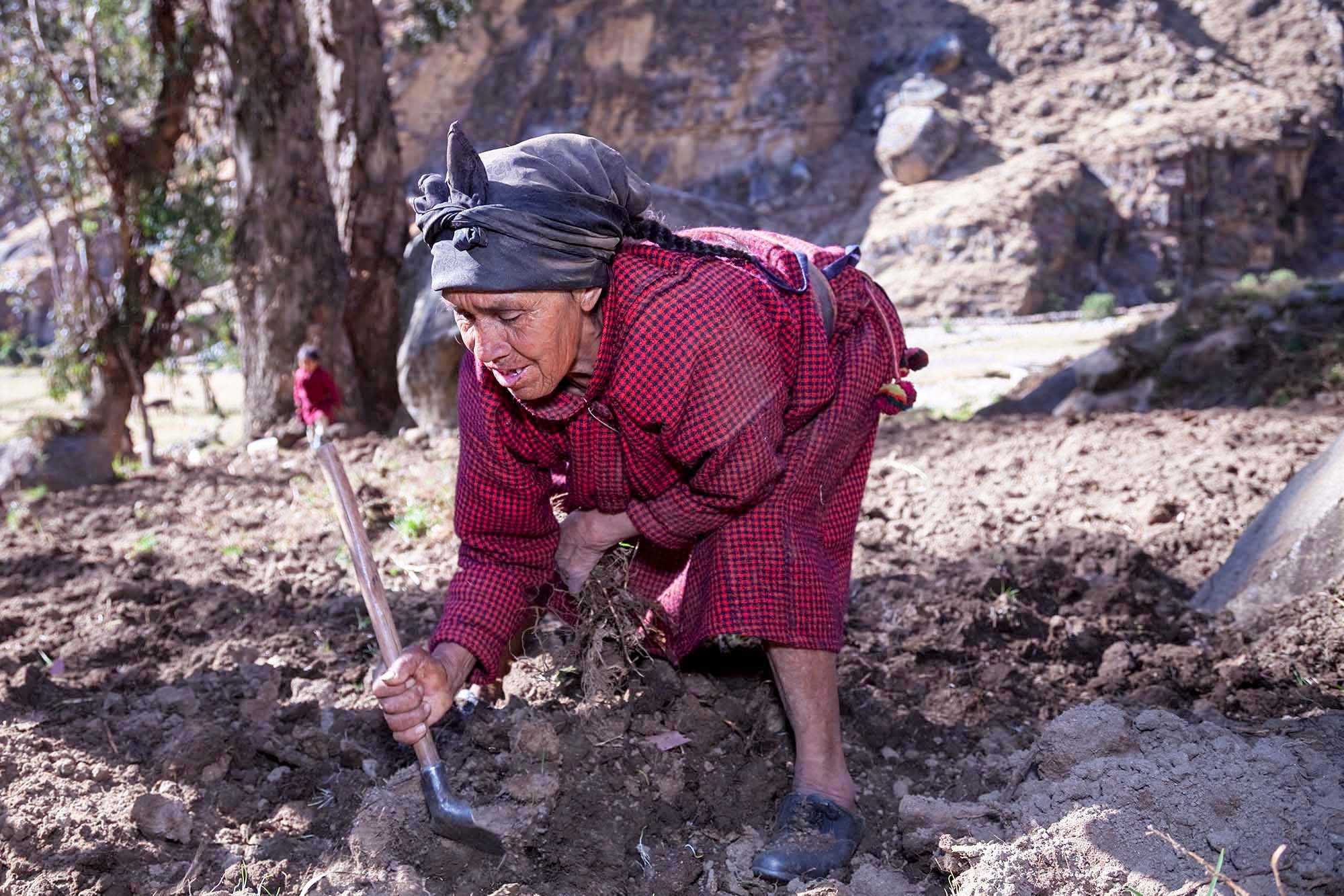 Eleuteria tilling the soil while wearing a mourning scarf.
