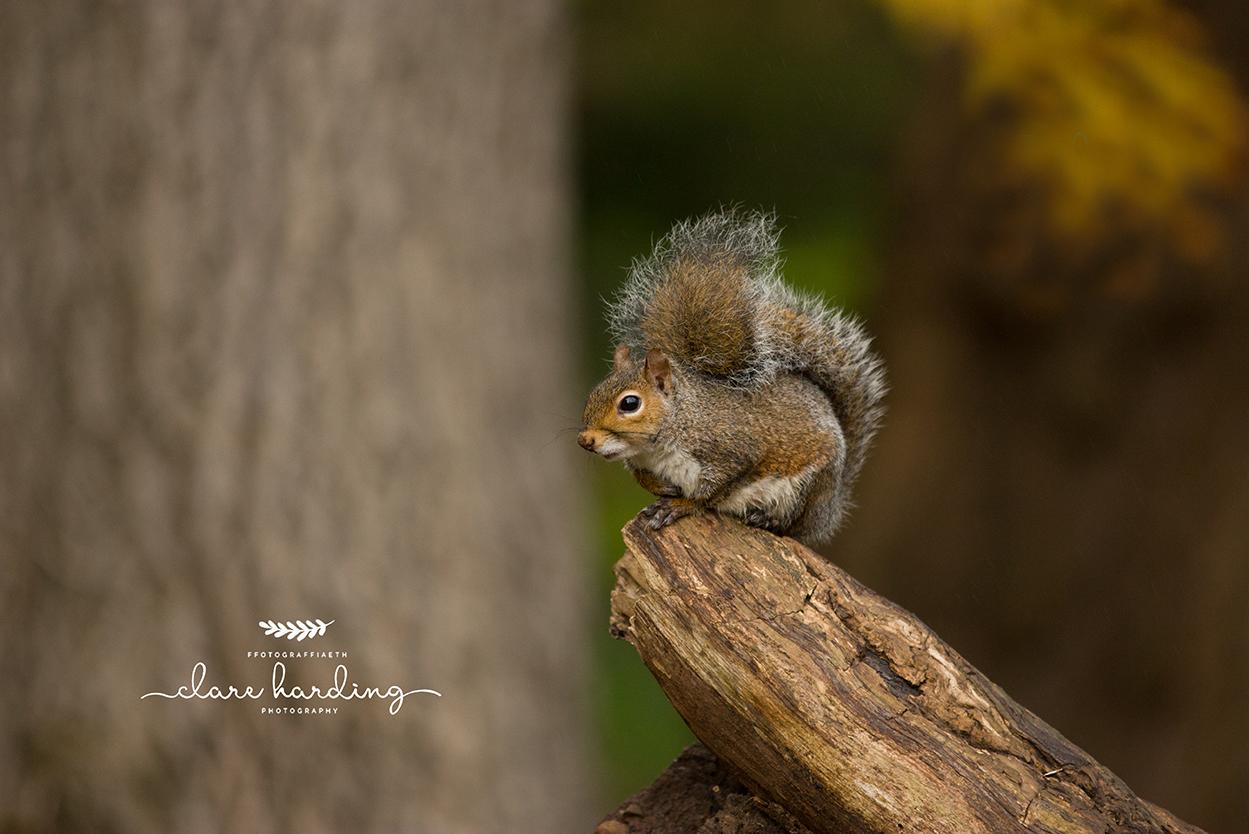 squirrel sat on a log in Cardiff