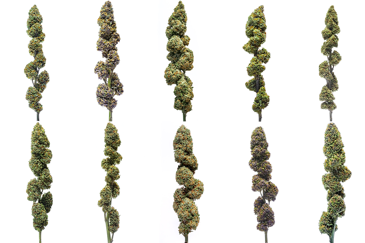 360º degree viewing - Get to know our 26 strains