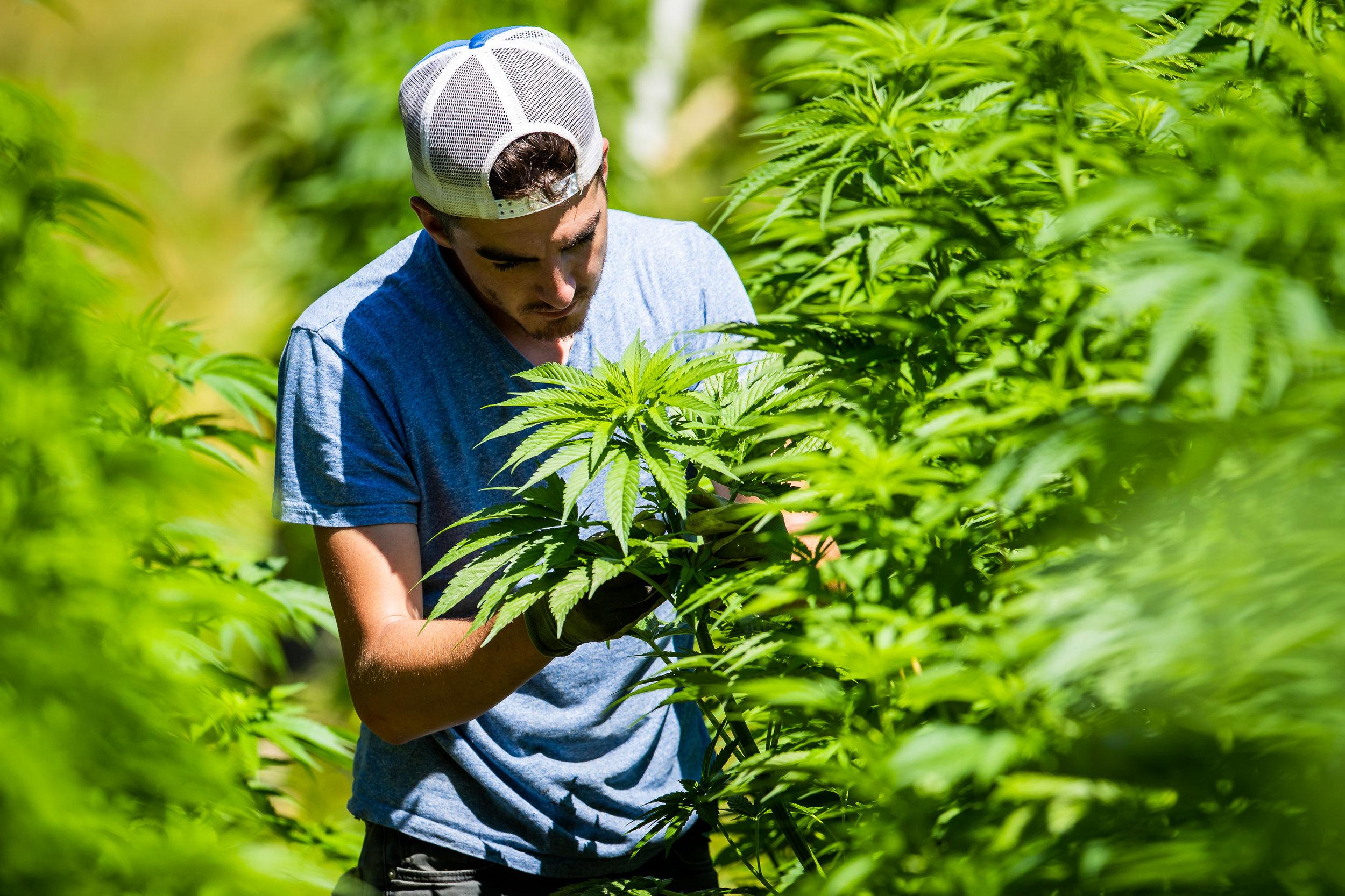 Cannabis 101 - Learn about cannabis from the roots up.