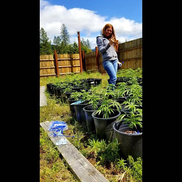 ✌💙 And it starts! Getting some #PlantTags on these girls before they get too big 🤩🌱 #GottaStartSomewhere #ApplegateValley #ItsTheClimate #RecCannabis #GrowOregon #OrganicCannabis #sungrown #Dosidos #PineappleUpsidedownCake #SourCookies #Zookies #WatermelonMimosa #clones #seedlings #SmokeBetterWeed #StayLifted @lita_826er_ @shushwrites