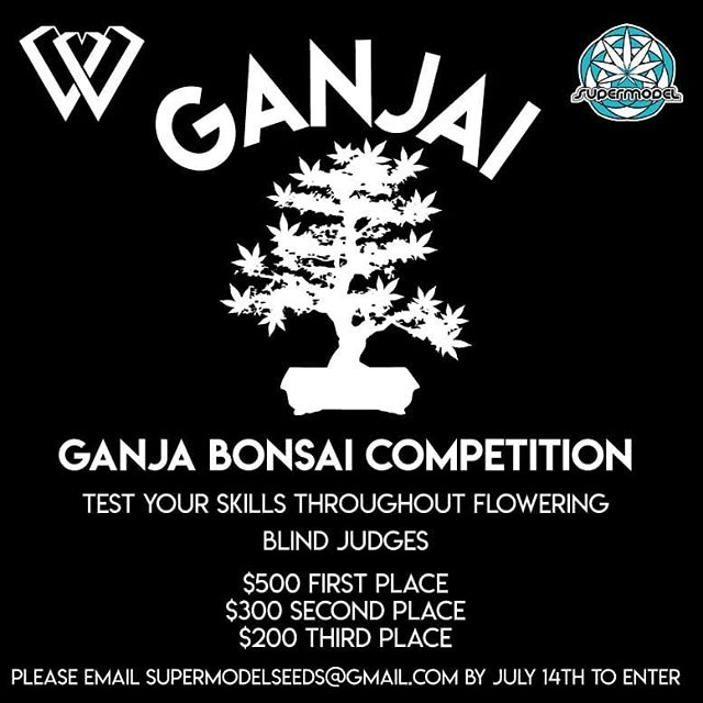 #contest #bonsai #growyourown #cannabis