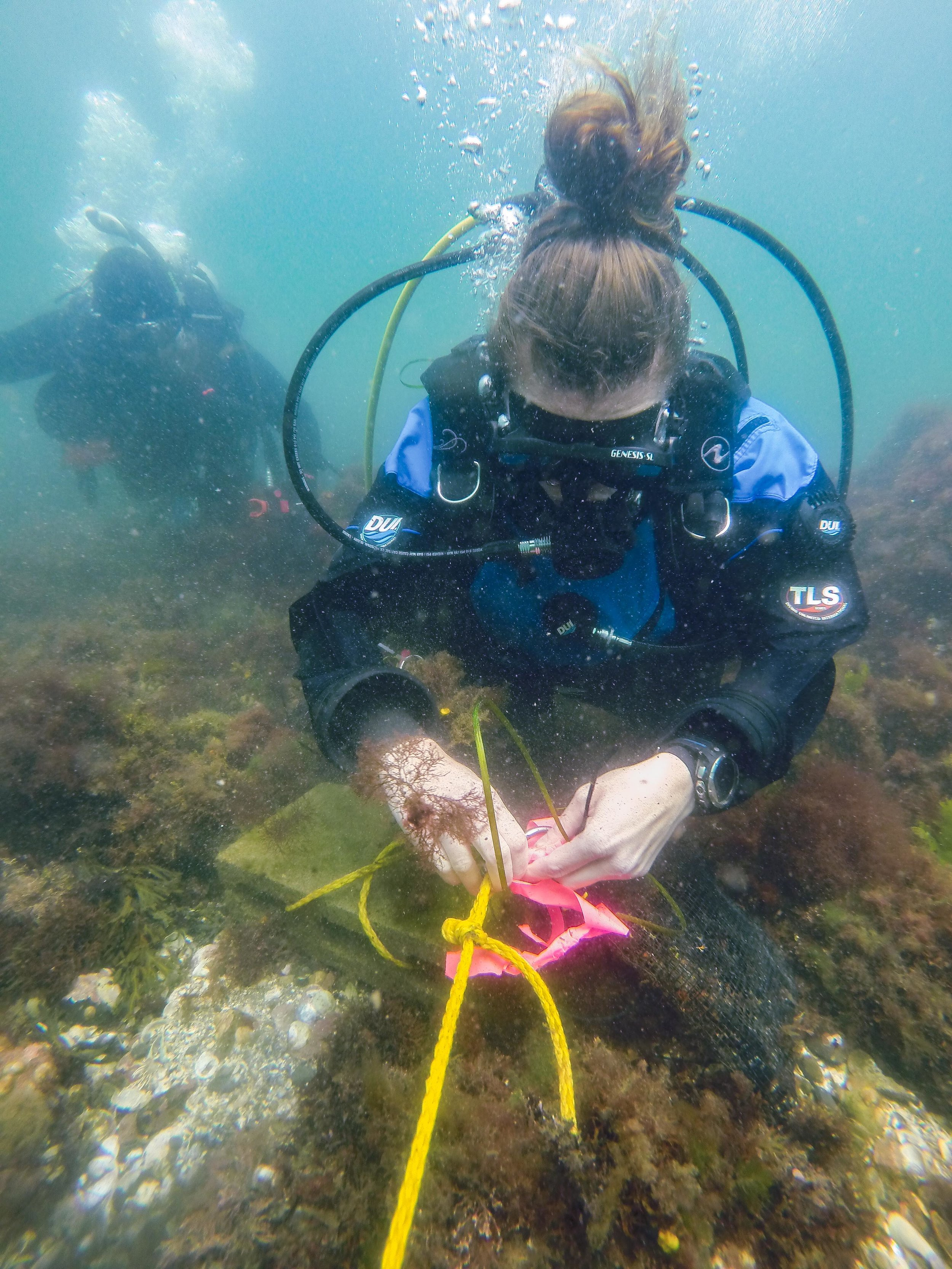 Contribute Data - Do you have data from dives around Cape Ann? Add your measurements and photos to the collection.